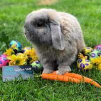 Easter open Hours 2020